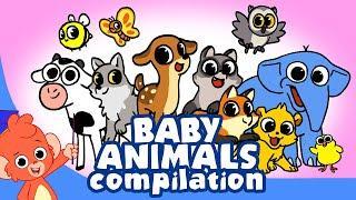 Learn Animals for Kids | Animal Babies Cartoon for children | Newborn Animal Cartoons