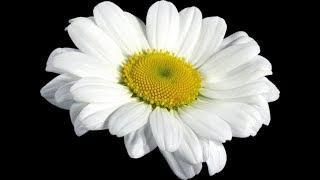 Цветочки в хрустальном плену | Научное шоу профессора Стекляшкиной | Часть 9 | Курган
