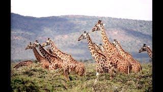 У жирафа пятна, пятнышки везде - Развивающие детские песни - Песни для детей - Фото животных