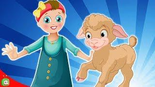 Mary Had Little Lamb Nursery Rhyme | Kids Songs | 3D Animation English Baby Rhymes |TukTukThe Train