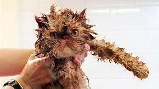 Смешные животные приколы про животных 2017 #36 (Говорящие смешные кошки)