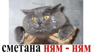 Приколы с Котами и Собаками | Смешные коты и собаки 2018 | Смешные Животные | ПРОБУЙ НЕ улыбнуться