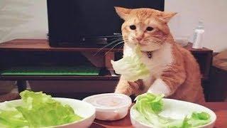 Смешные животные коты собаки котики и собачки - Смешное видео с животными 2018
